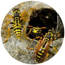 Bee Removal Scottsdale AZ