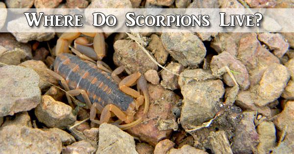 Where Do Scorpions Live