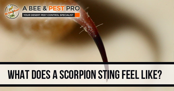 What Does A Scorpion Sting Feel Like