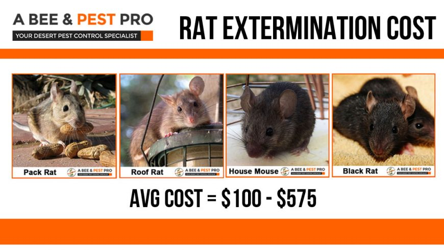 How Much Does Rat Extermination Or Removal Cost From Roof