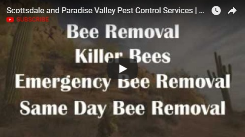 Pest Control Scottsdale - Youtube